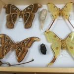 Big butterflies